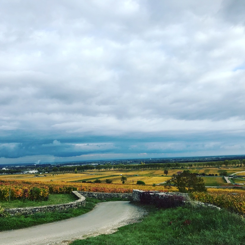 A Day in the Grand Cru Vineyards of Burgundy